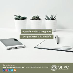 OLIVO_MAYO23